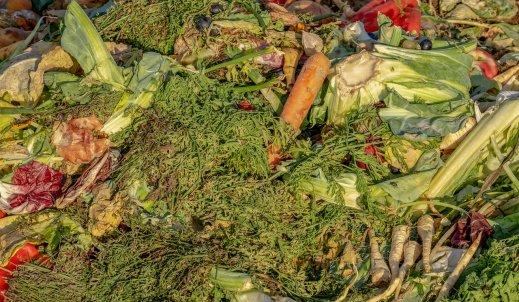 Jakie są problemy z wyżywieniem ludności na Ziemi?