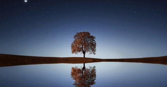tree-838667_1280