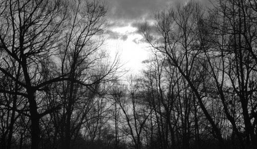 Próbując przebić się  przez mroczny las…