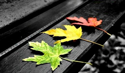 liście z drzew na ziemi śpią