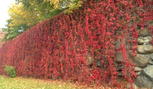 Jesień na murach