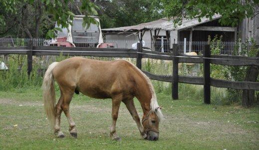 Konie lekarstwem na…