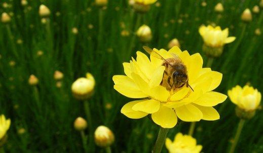 Pracowity… jak pszczoła