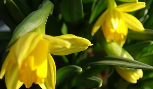 Mamy wiosnę!