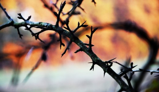 Opolska Jesień