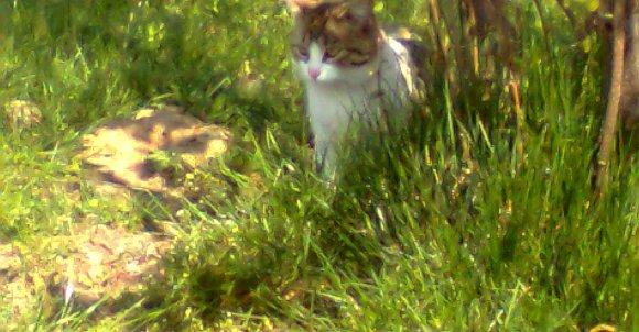 Jedena z moich kocic czająca się przy drzewkach na naszym podwórku.