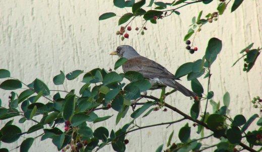 Czy znamy te ptaki?
