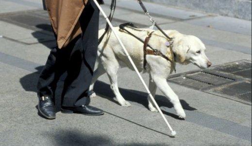 Oddany pies przewodnik
