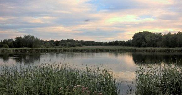 Łabędzie , perkozy i kurki wodne na Żabich Dołach pogranicze Bytomia i Chorzowa