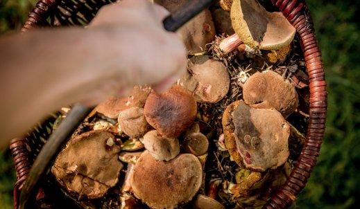 Jesienni pasjonaci, czyli portret grzybiarza