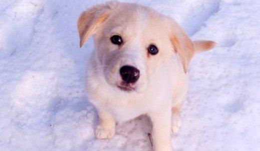 Zwierzęta zimą oczekują naszej pomocy…