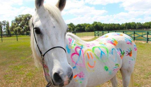 Galopem po marzenia… Jeździectwo to też sport
