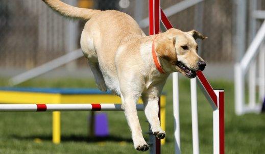 Psie sporty – sposób spędzania wolnego czasu z psem