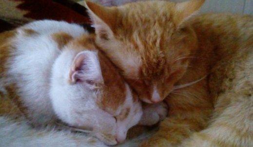 Wspólne dzieje kotów i ludzi