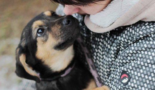Zbiórka na rzecz Schroniska dla Bezdomnych Zwierząt w Radomiu