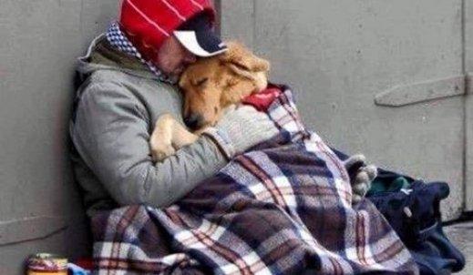 Pies- stróż człowieczy