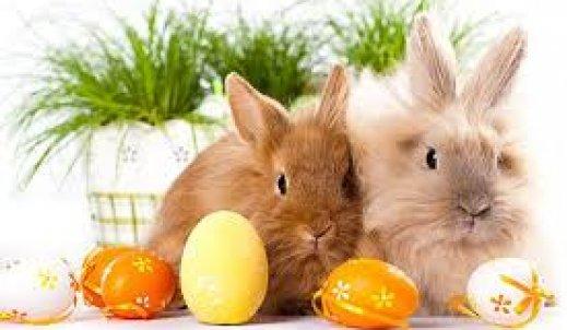 Jak przygotowujemy się do Świąt Wielkanocnych.?