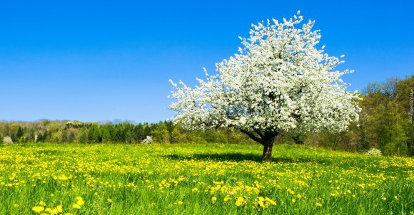 166797_laka_kwiat_drzewo_las_wiosna.jpg