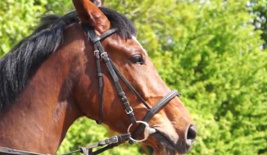 Zawody jeździeckie – kocham je!