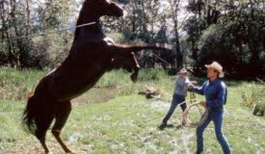 """,,Zaklinacz koni""""- film, który chwyta za serce"""