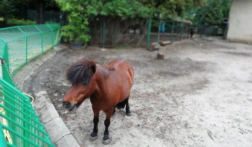 Co w trawie (i w klatce) piszczy w poznańskim zoo?