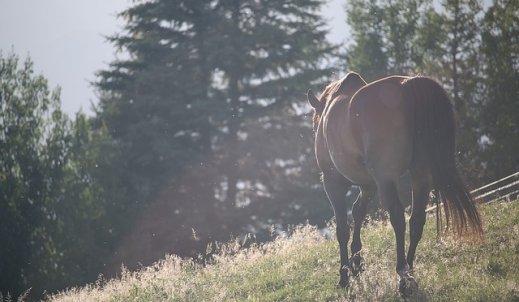 Jeździectwo – moja pasja!