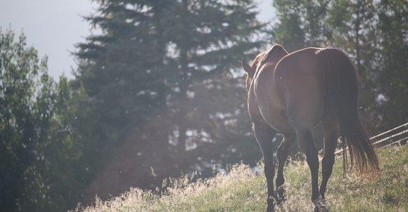 horses1150017_640.jpg
