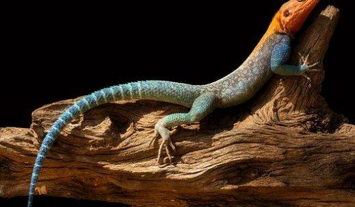Najpiękniejsze zwierzę z lasów tropikalnych.