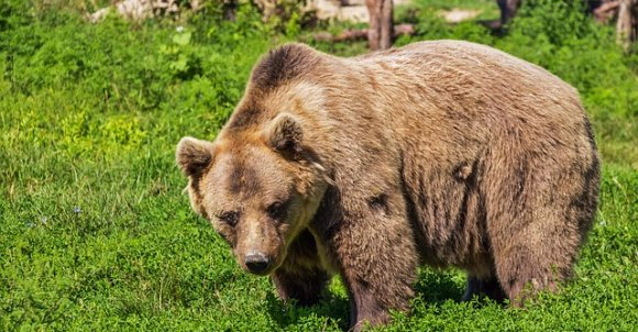 bear422682_640.jpg