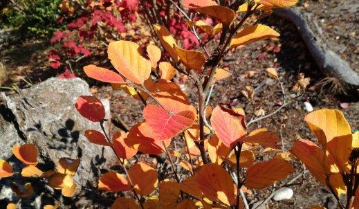 Jesień wcale nie musi być taka straszna  – plusy i minusy jesieni