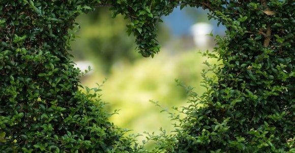 heart1192662_960_720.jpg
