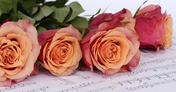 roses2366341_960_720.jpg