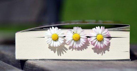 book2319957_960_720.jpg
