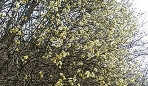 Powrót wiosny!