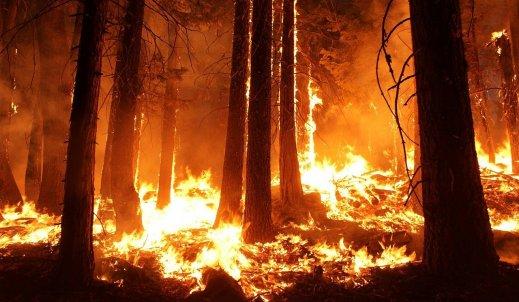 """Płoną góry, płoną lasy…"""