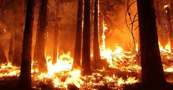 wildfire1105209_1280.jpg