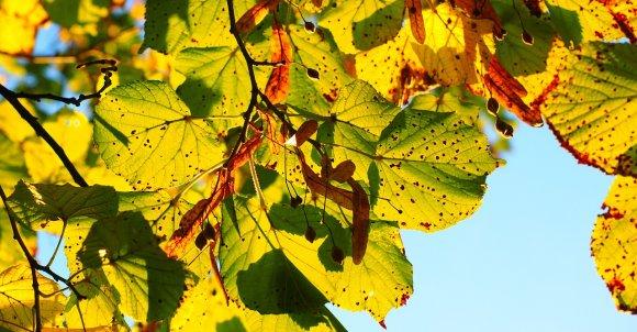 leaves767515_1280.jpg