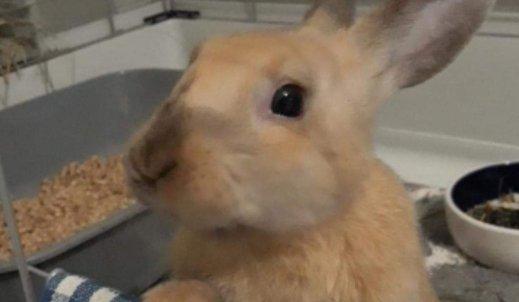 Wyprawka dla królika – od czego zacząć?
