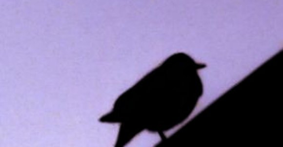 Do zrobienia takiego zdjęcia potrzebujesz:  -Ptaka który na czymś siedzi np. na znaku -Aparat lub telefon   Przybliż na ptaka. Ustawienia dostosuj jak ci pasuje. Teraz tylko przerób zdjęcie w jakiejś aplikacji i gotowe!