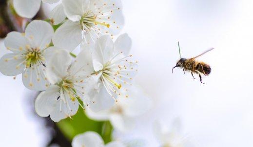 Nie ma życia bez pszczół